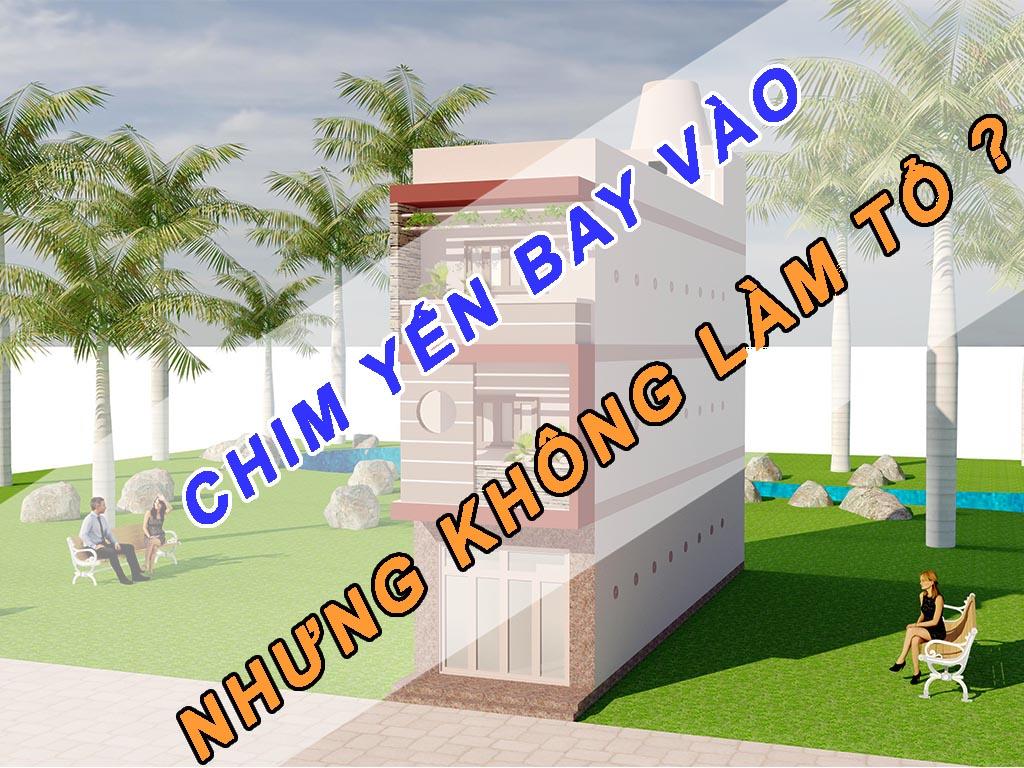 CHIM YẾN BAY VÀO NHÀ NHƯNG KHÔNG LÀM TỔ